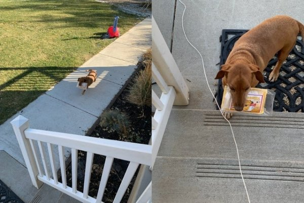 Ridiculous Dog Behavior (28 pics)