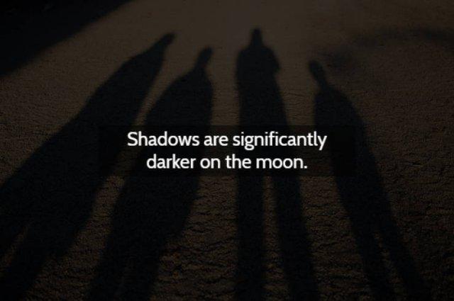 Strange & Spooky Facts (15 pics)