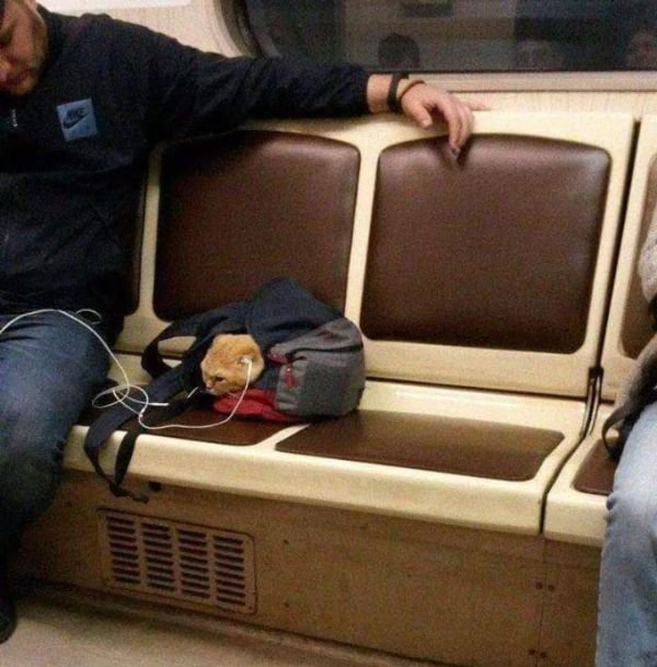 Funny And Strange Things On the Subway (23 pics)