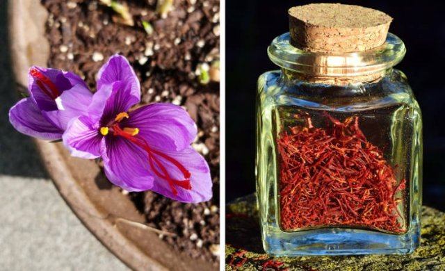 What Spices Look Like (15 pics)