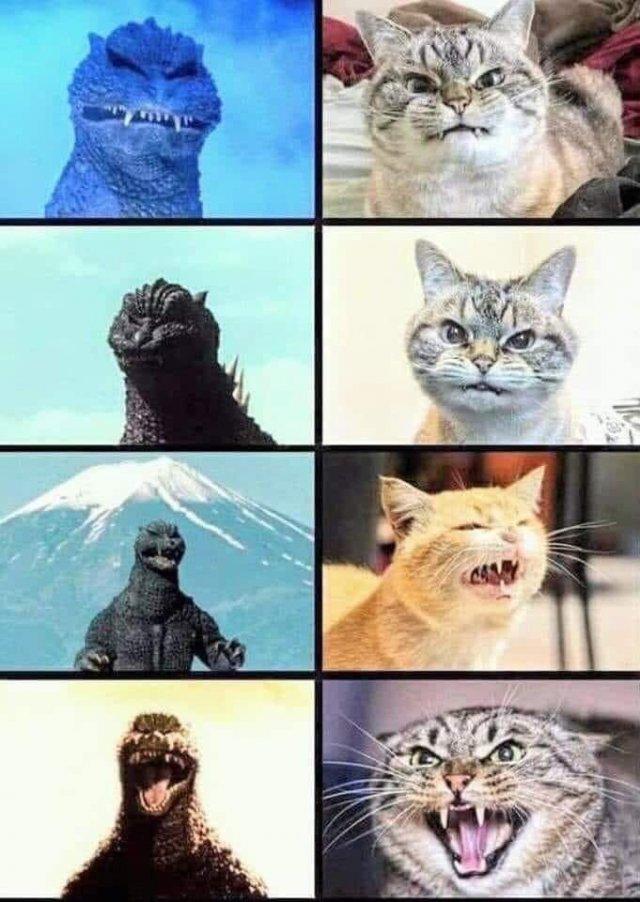 Funny Cats (31 pics)