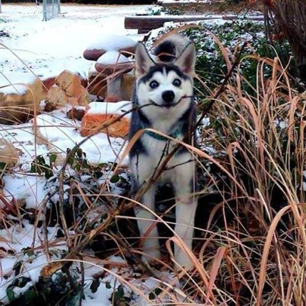 Cute Dogs Pictures (42 pics)