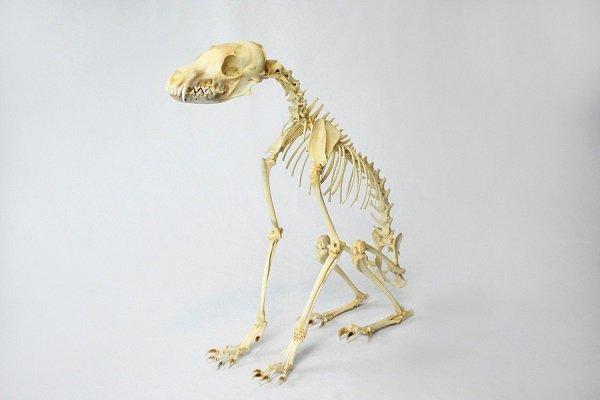 Spooky But Interesting Oddities (25 pics)