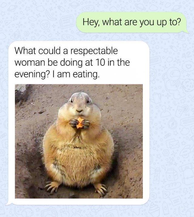 Funny Texts (15 pics)