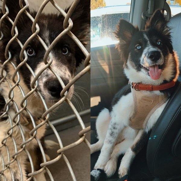 Photos Of Dogs Before & After Their Adoption (30 pics)