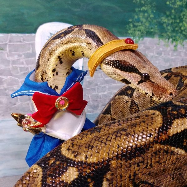 Snakes In Hats (28 pics)