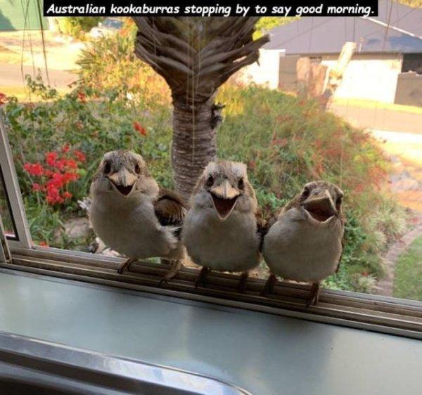 Random Funny Animals Pics (61 pics)