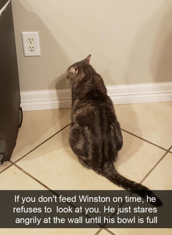 When You Have A Cat (32 pics)