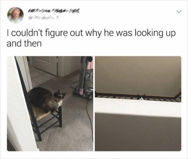 Cats Memes (20 pics)