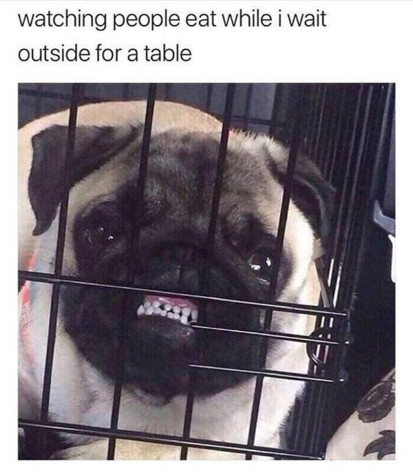 Improve Your Mood With These Funny Pictures (50 pics)