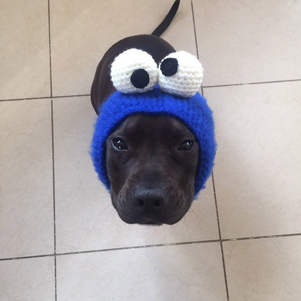 For Sure Your Pet Needs One Of These Croched Hats (27 pics)