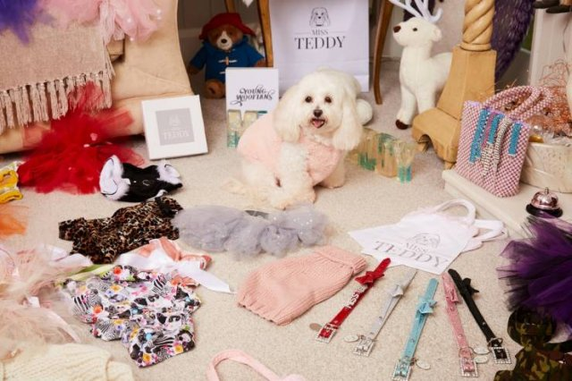 This Woman Spent A Small Fortune On Her Dog (12 pics)