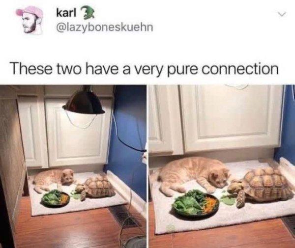 Memes About Pets (23 pics)