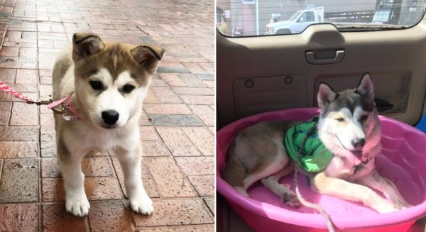 Dogs Grow Up So Fast (25 pics)