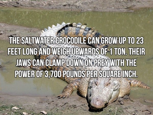 Interesting Facts About Most Dangerous Animals In The World (18 pics)