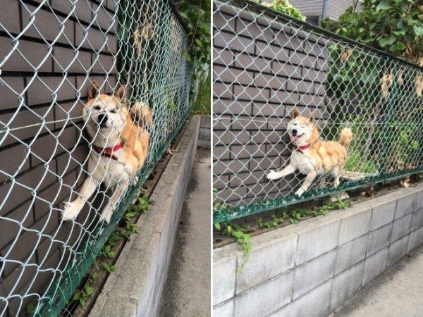 Hilarious Pet Fails (30 pics)