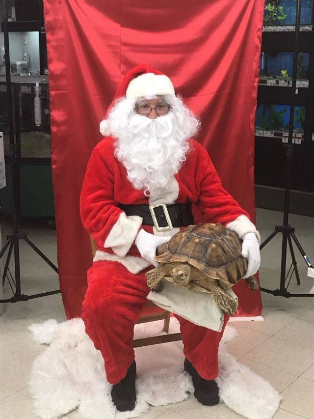 Photos With Mall Santas (36 pics)