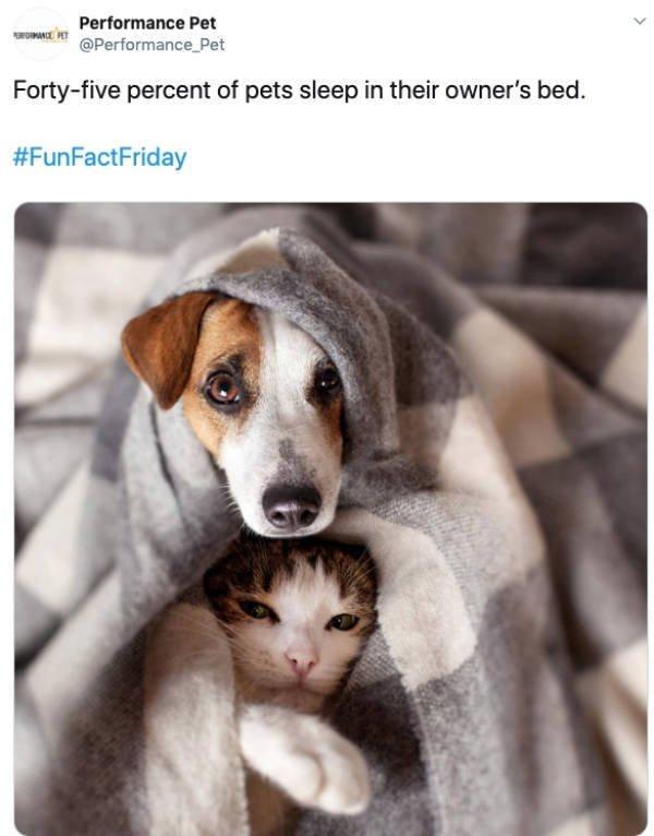 Fun Facts (28 pics)
