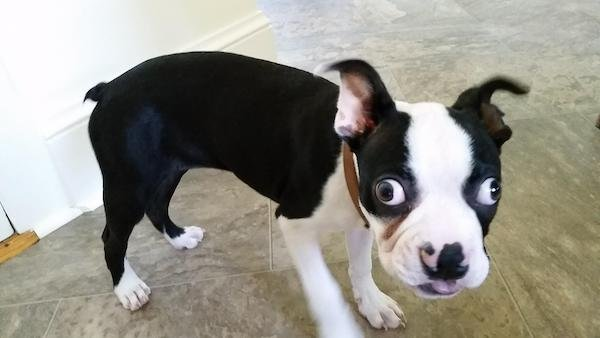 Hilarious Dogs (30 pics)
