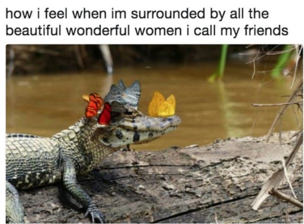 Memes For Women (35 pics)
