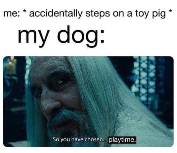 Funny Dog Memes (30 pics)