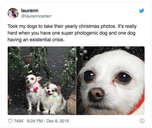 Funny Animals (54 pics)