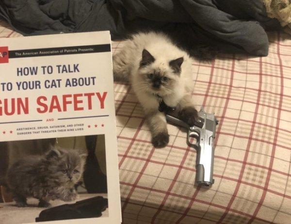 Funny Cats Of 2019 (98 pics)