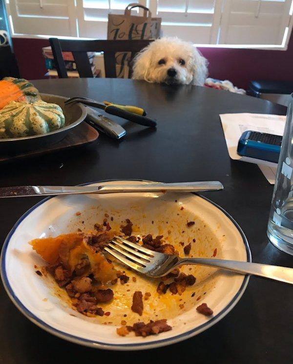 Pets Staring At Food (32 pics)