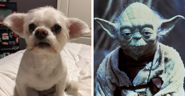 No Doubt, Star Wars Exists In Real Life (20 pics)
