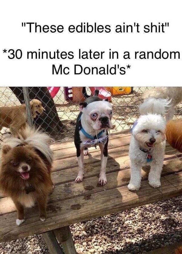 Random Funny Memes (50 pics)