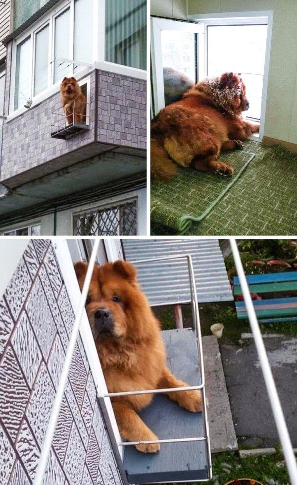 Hilarious Pets (56 pics)