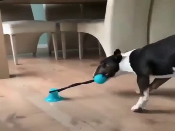 That's One Way To Keep A Dog Busy