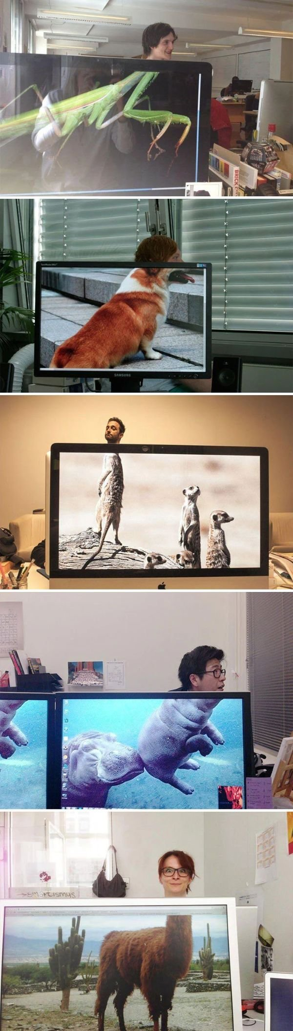 Creative Wallpapers (26 pics)