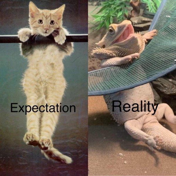 Expectations Vs. Reality (37 pics)