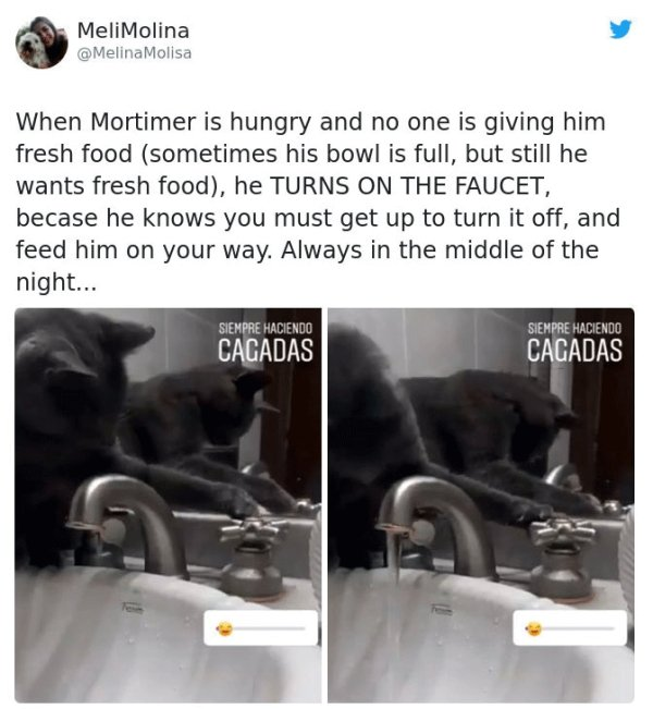 Tweets About Cats (28 pics)