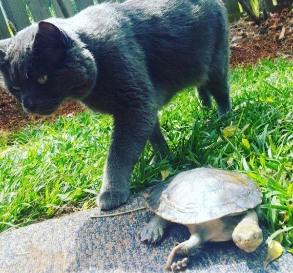 Unusual Animal Friendships (25 pics)