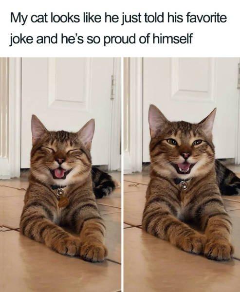 Joking Cat (22 pics)