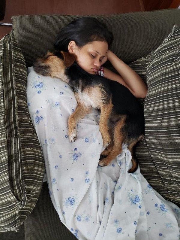 Cute Adopted Pets (35 pics)