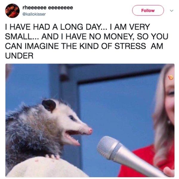 Some Funny Possums (51 pics)