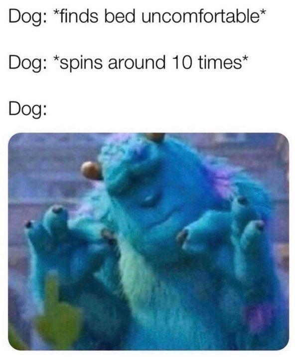 Dog Memes (32 pics)