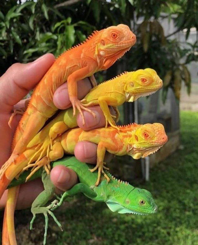 Beautiful Colors Of Nature (23 pics)