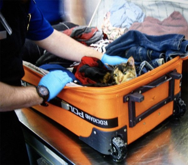 What TSA Confiscated From Passengers (26 pics)