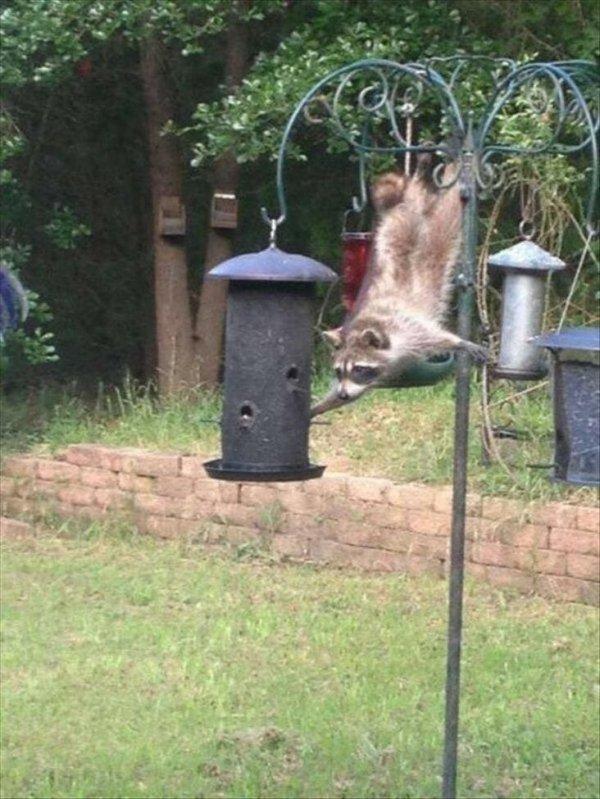 Hilarious Animals (65 pics)