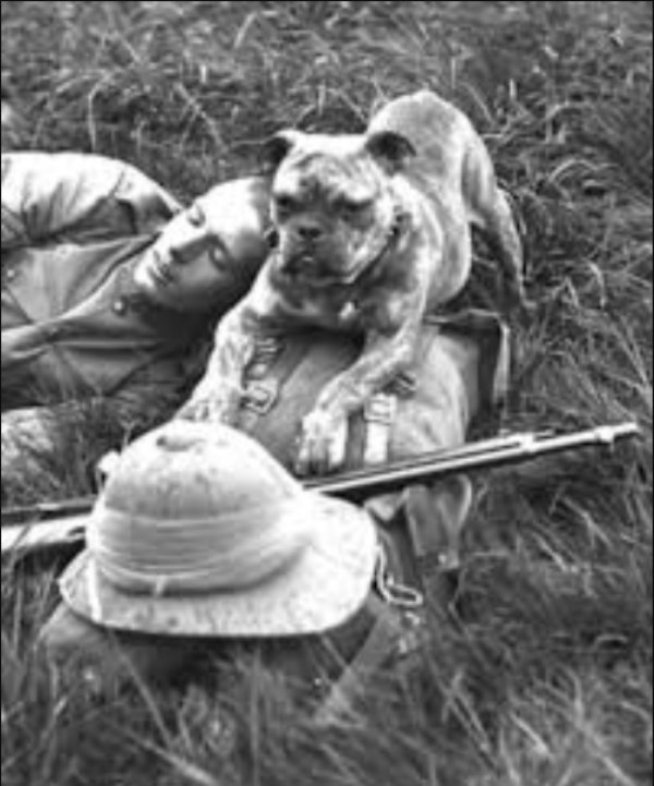 Brave Dogs Of WWI And WW2 (34 pics)