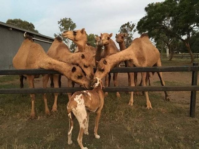 Only In Australia (37 pics)