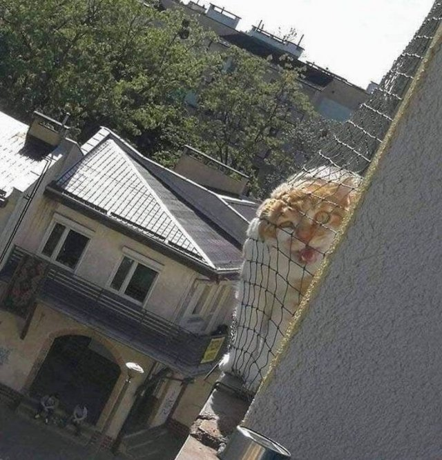 When You Have Neighbors (15 pics)