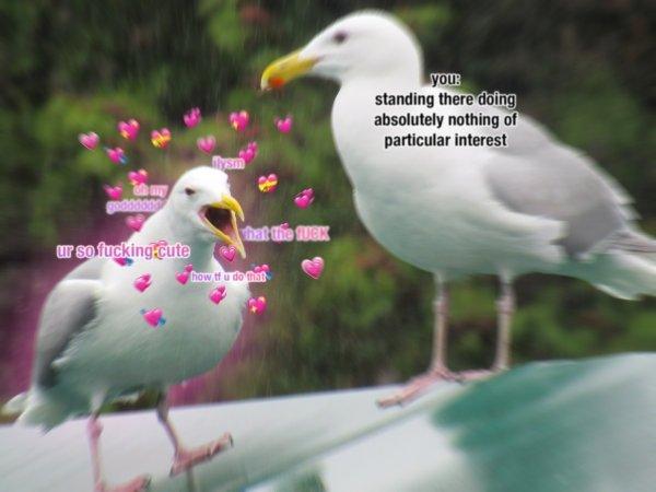 Flirtatious Memes (34 pics)