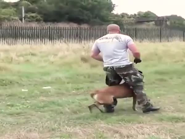 This Dog Being Trained