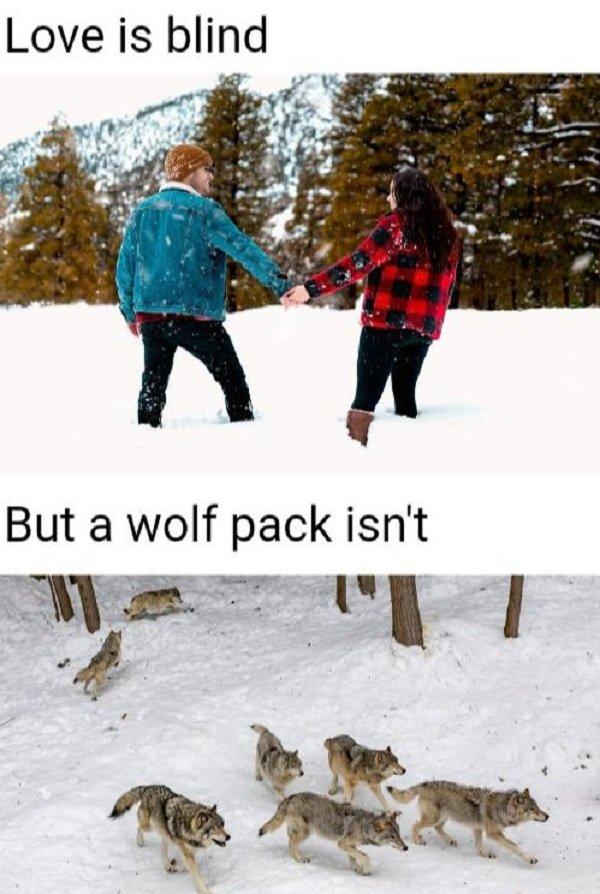 Random Funny Memes (58 pics)