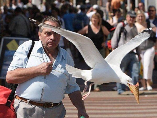 Seagulls Are Real Kleptomaniacs (32 pics)
